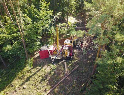 Schädlingsbefall im Pesenbachtal